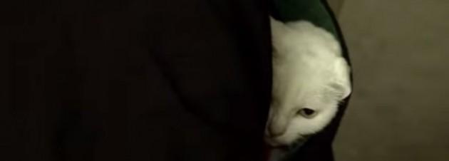 あなご 猫侍