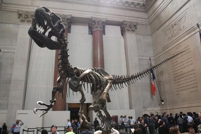 アメリカ自然博物館